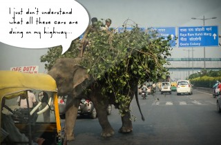 India_DelhiElefant
